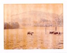 Hudson Ranch