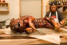 Berk-Hampshire Pig
