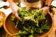 Tossing Garden Greens